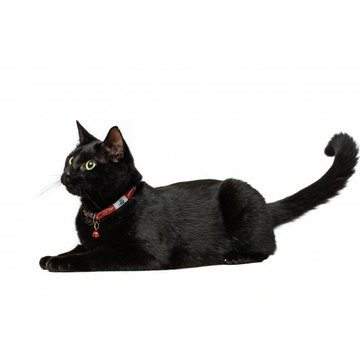 Long Paws Tom & Tabby Reflective Cat Collar