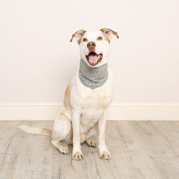 Pet Brands Cooling Bandana
