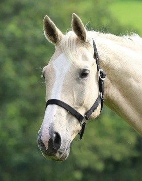 Shires Wessex Black Headcollar