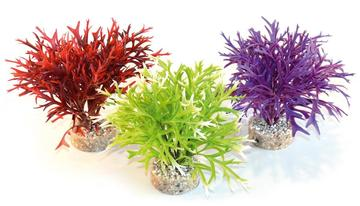 Sydeco Coloured Water Fern Height Aquarium Plant
