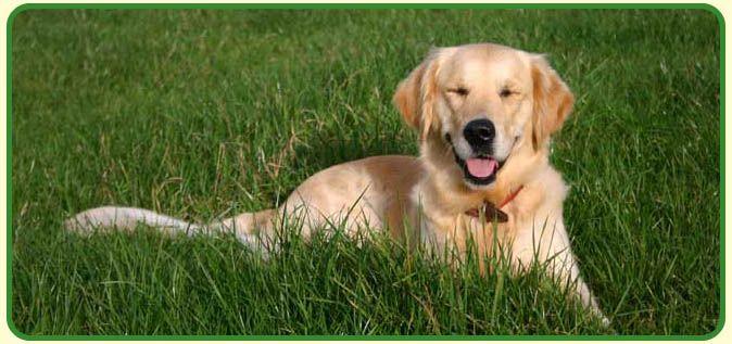 Dog James Wellbeloved