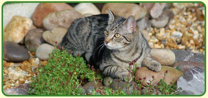 Wellbeloved Cat