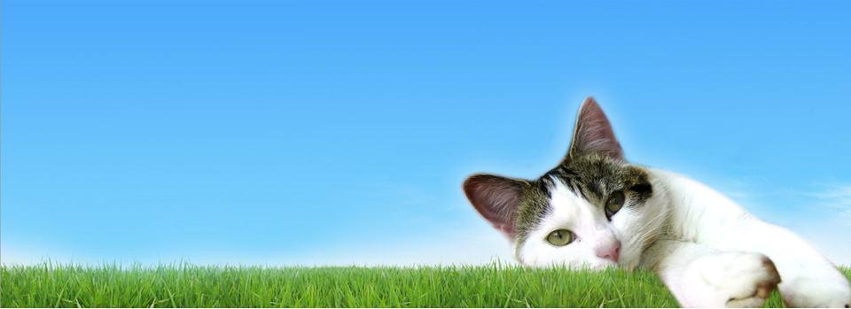 https://static1.viovet.co.uk/opt/s=kr/embedded/1335260480_1736header-adult-cat.jpg