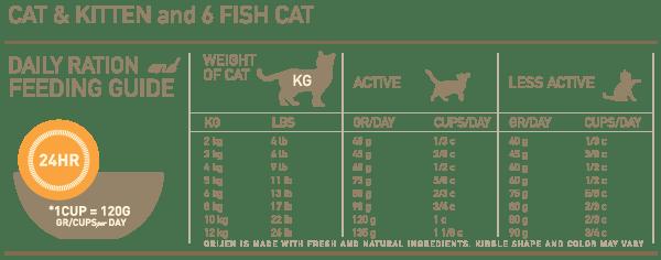 cat-kitten-6FC-feeding