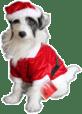 Stewie, looking like the perfect Santa's little helper!