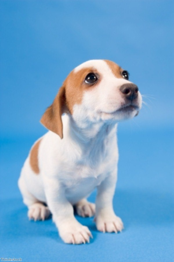 Taking your first steps in puppy training