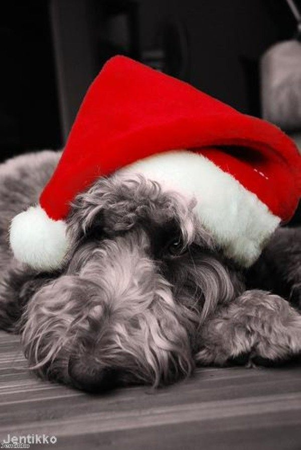 Great Christmas gifts for your pooch