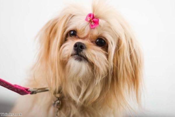 Vaccinations: does my dog need them?