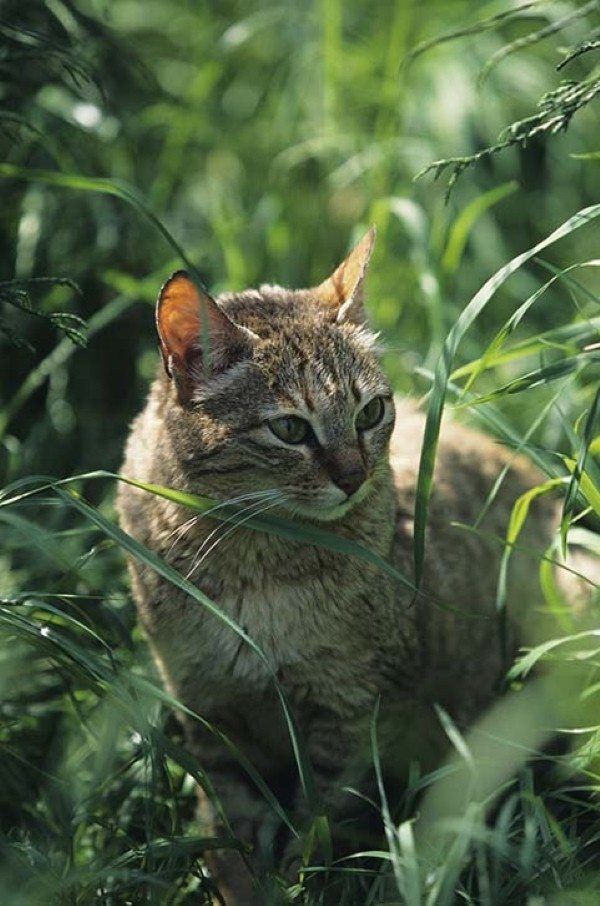 Why choose natural feeding for your cat?