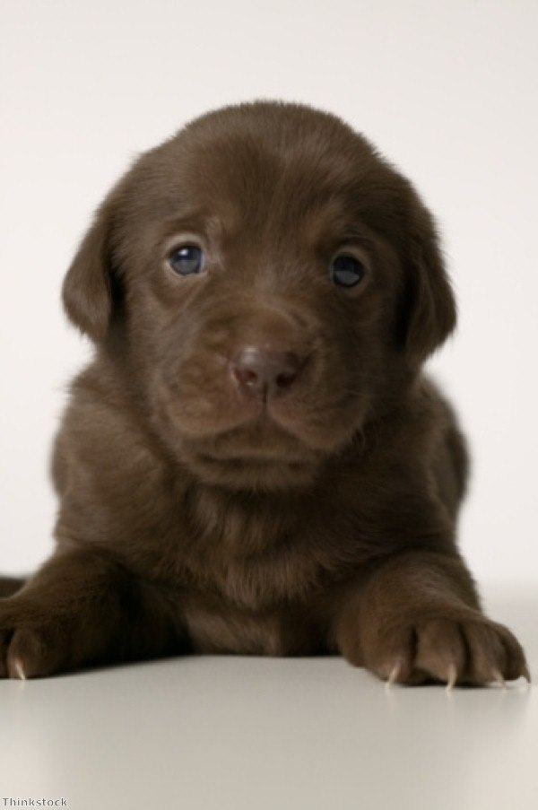 What to consider before taking home a dog