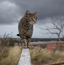 Are Cat Vaccinations Necessary Viovet Blog