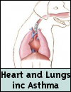 Dog Heart & Lungs (inc. Asthma)