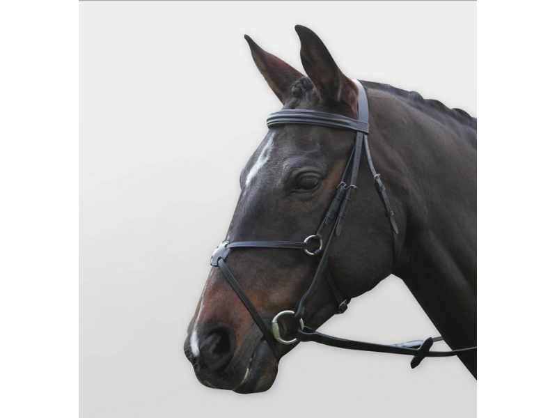 Black » Warmblood