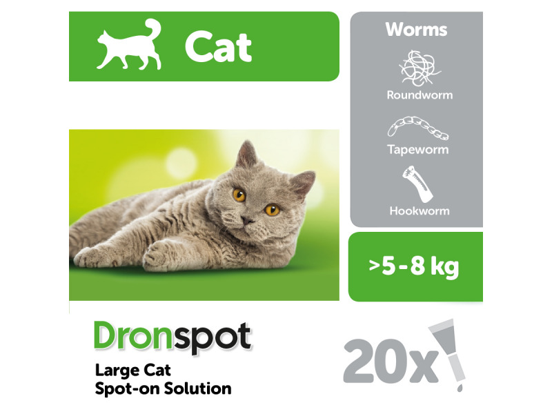 Large Cat » 1 Pipette
